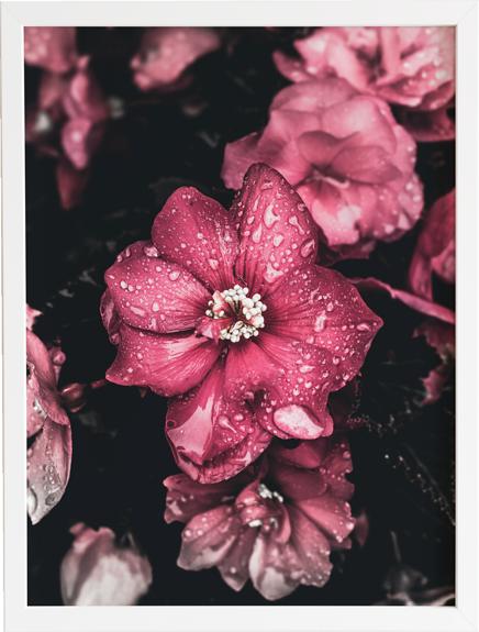 Flower dark 2