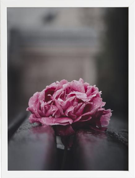 Flower dark 3 obraz do domu