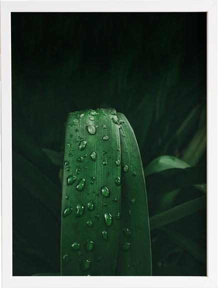 Green 10 obraz do domu