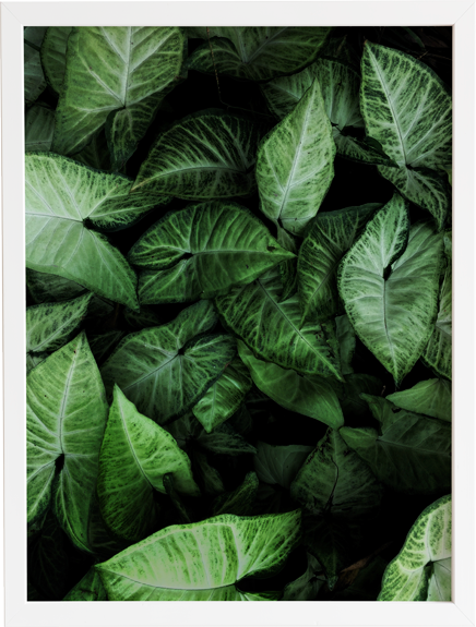 Green 13 obraz do domu