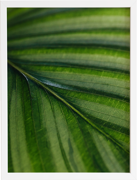 Green 17 obraz do domu
