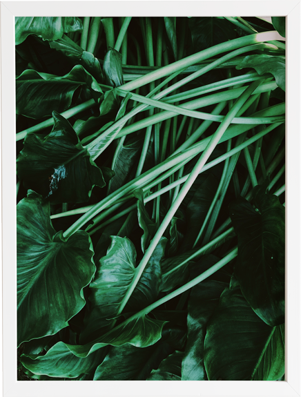 Green 8 obraz do domu