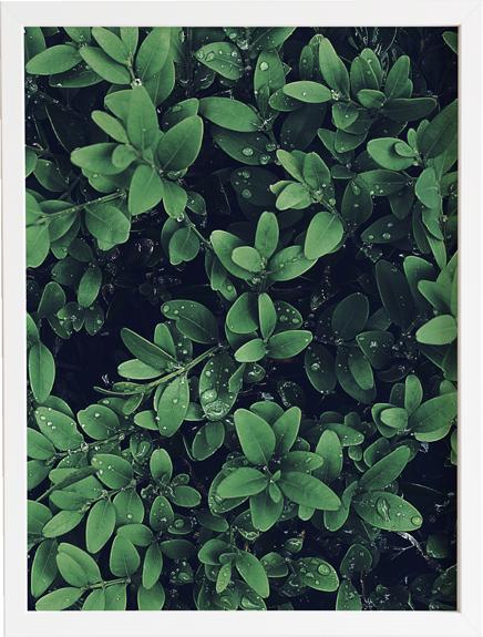 Green 9 obraz do domu
